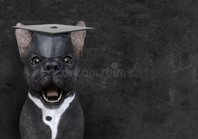 Funny Teacher Dog, Education, Chalkboard, Learning stock photography