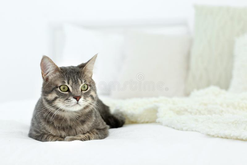 Cute funny cat on bed royalty free stock photography
