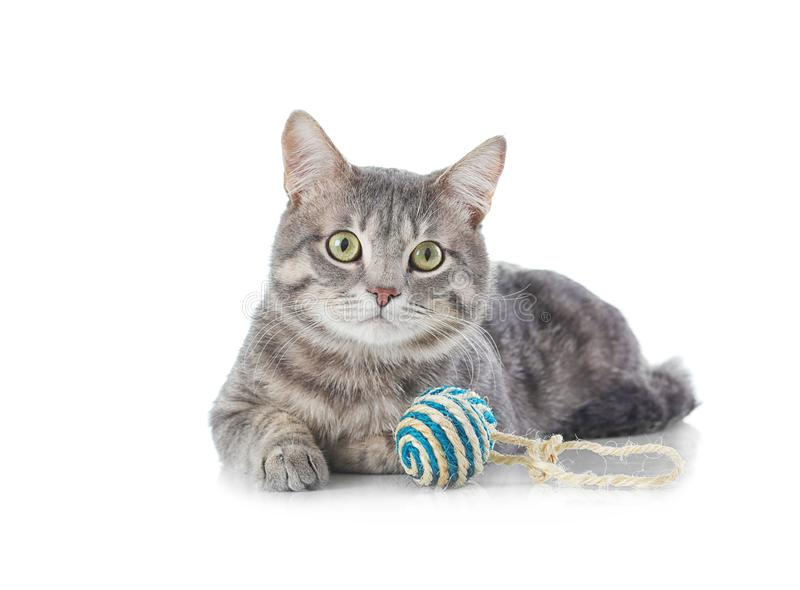 Cute funny cat with toy stock images