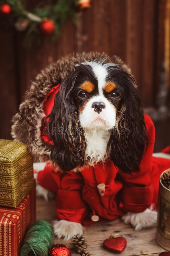 Free Cute Funny Dog Celebrating Christmas And New Year With Decorations And Gifts. Chinese Year Of The Dog. Royalty Free Stock Images - 100836509