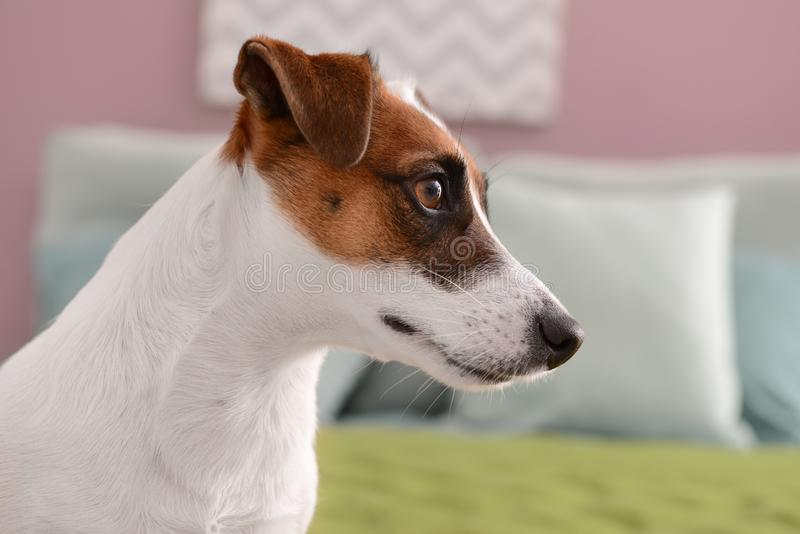 Cute funny dog at home stock photography