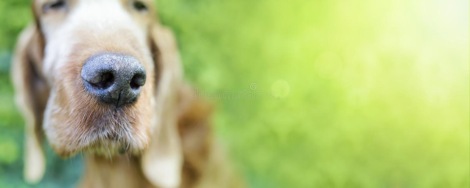 Cute funny dog royalty free stock images