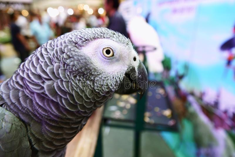 Cute Funny parrot stand  At A Pet Store. Cute Funny parrot stand At A Pet Store stock images