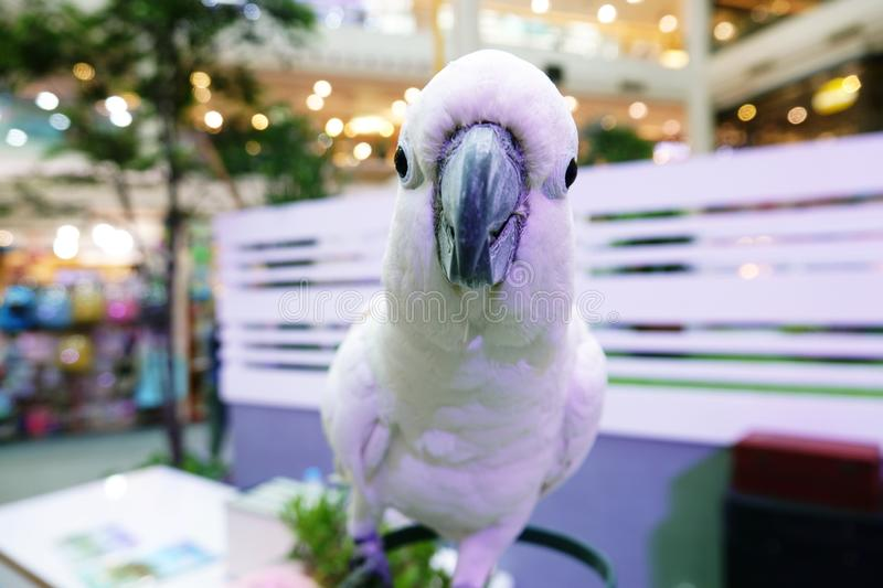 Cute Funny parrot stand  At A Pet Store.  stock photos