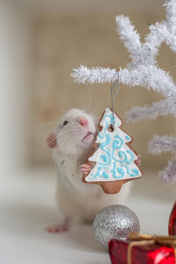 Cute funny rat on a background of Christmas decorations. And gingerbread stock photos