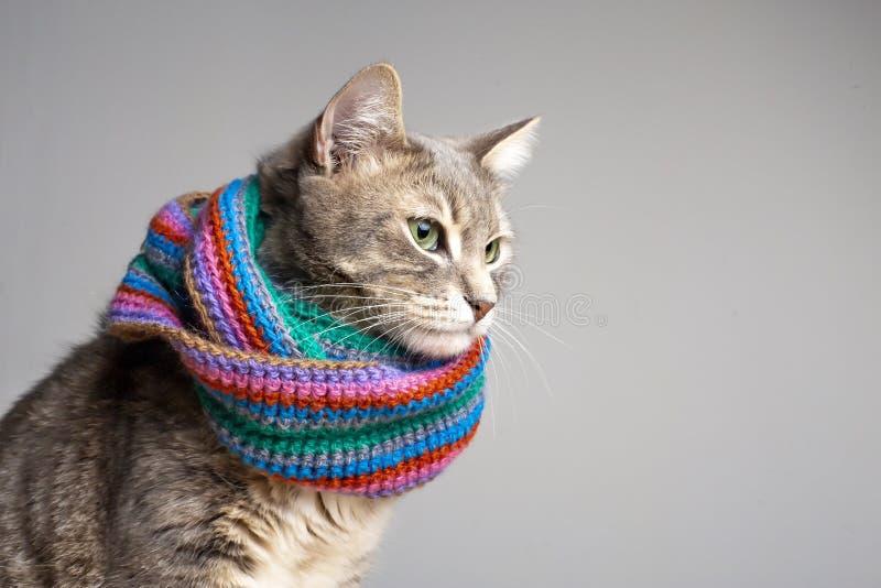 Cute gatta con sciarpa a maglia colorata pronta per l'autunno freddo e l'inverno, un aspetto triste con bellissimi occhi verdi, c fotografia stock