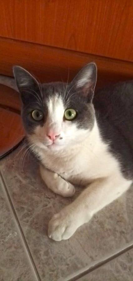 Cute gatto immagini stock