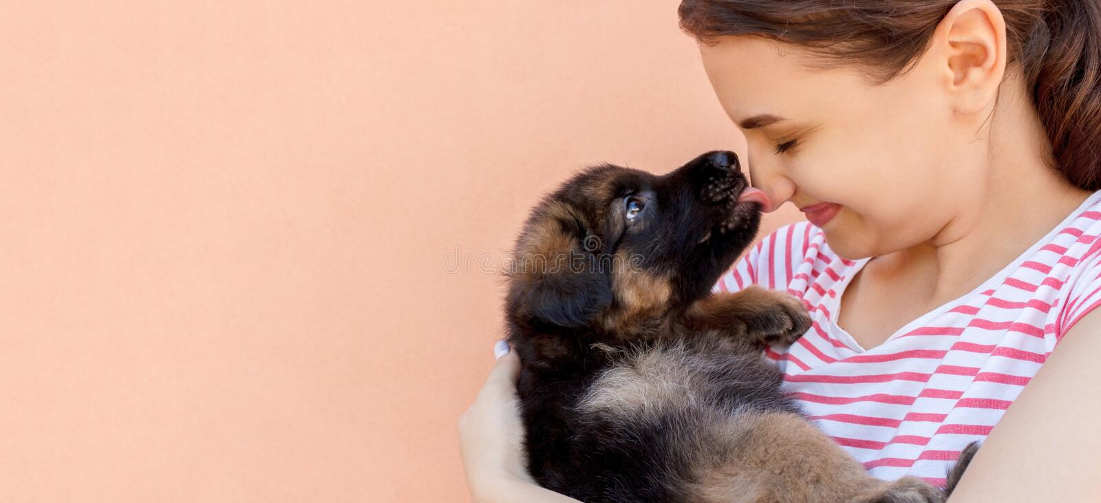 Cute German shepherd puppy kissing woman`s nose.  stock photography