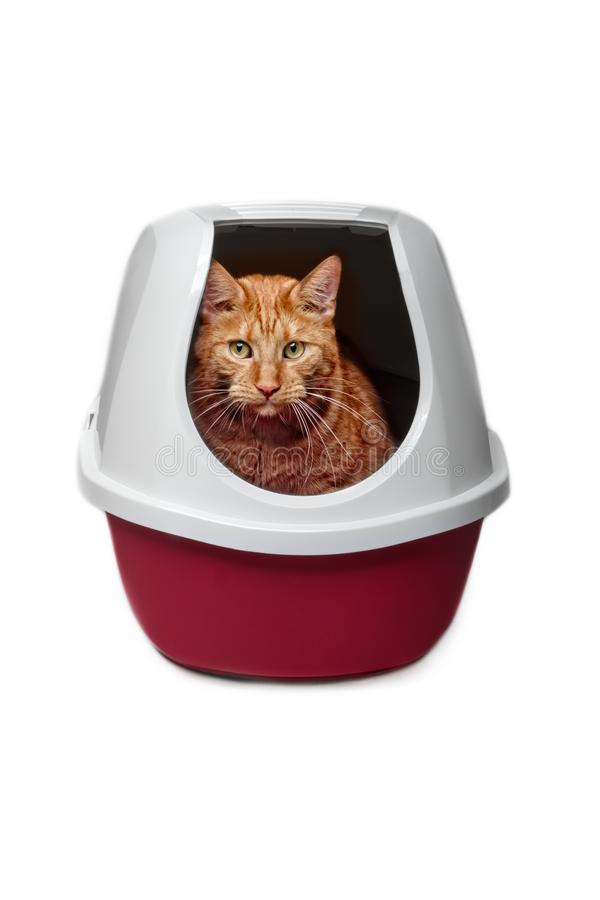 Cute ginger cat using a closed litter box isolated on white royalty free stock photos