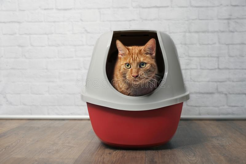 Cute ginger cat using a red, closed litter box. stock photography