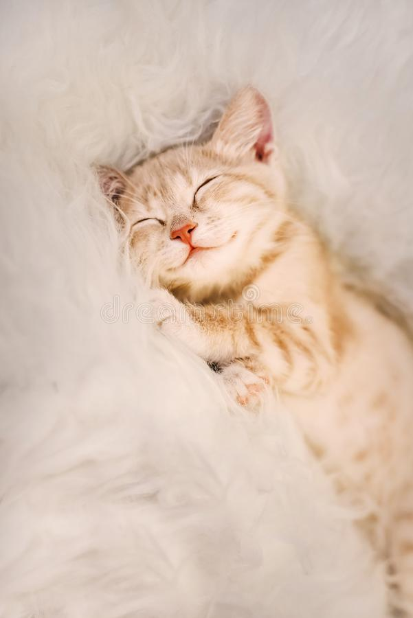 Cute, Ginger kitten is sleeping and smiling on a fur blanket. Concept cozy Hyugge and good morning. stock photography