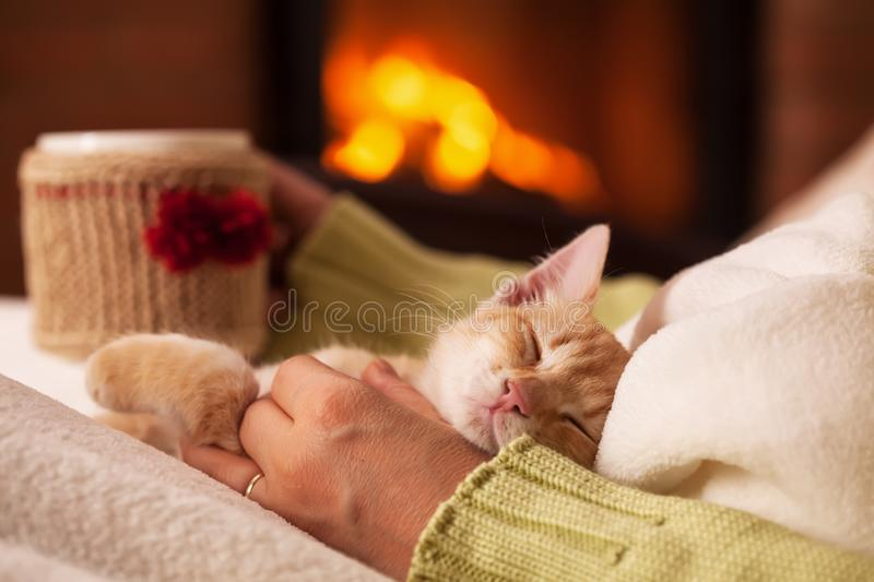 Cute ginger kitten in total relaxation, resting in the lap of his owner stock photo