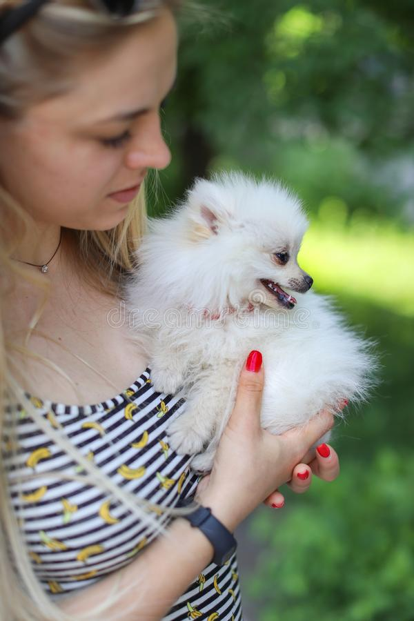 Cute girl with blond hair holds small breed dog in her arms and rejoices in the animal. Small white dog. Pomeranian stock photo