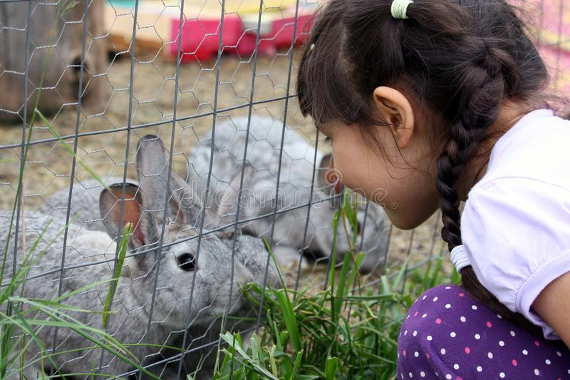 Cute girl with braids looking at bunnies on a farm royalty free stock images
