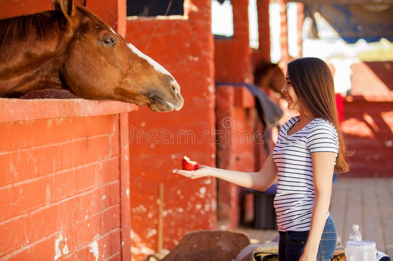 Cute girl feeding her horse. Beautiful young woman feeding her horse with apples in a ranch royalty free stock photography