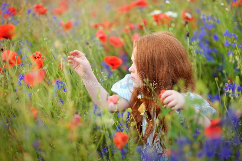 A cute girl in field of wildflowers in the open air. The girl in. The a cute girl in field of wildflowers in the open air. The girl in the poppies. Happy kid stock images