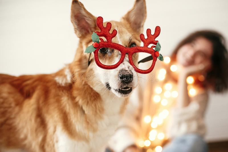 Cute golden dog in festive reindeer glasses with antlers looking with funny emotions on background of smiling girl in christmas. Lights. Merry Christmas. Happy royalty free stock photography