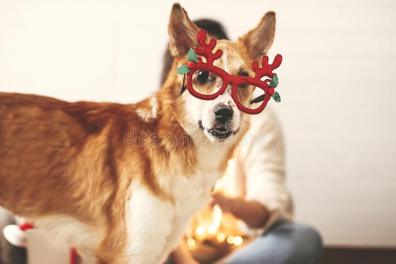 Cute golden dog in festive reindeer glasses with antlers looking with funny emotions on background of smiling girl in christmas. Lights. Merry Christmas. Happy stock photography