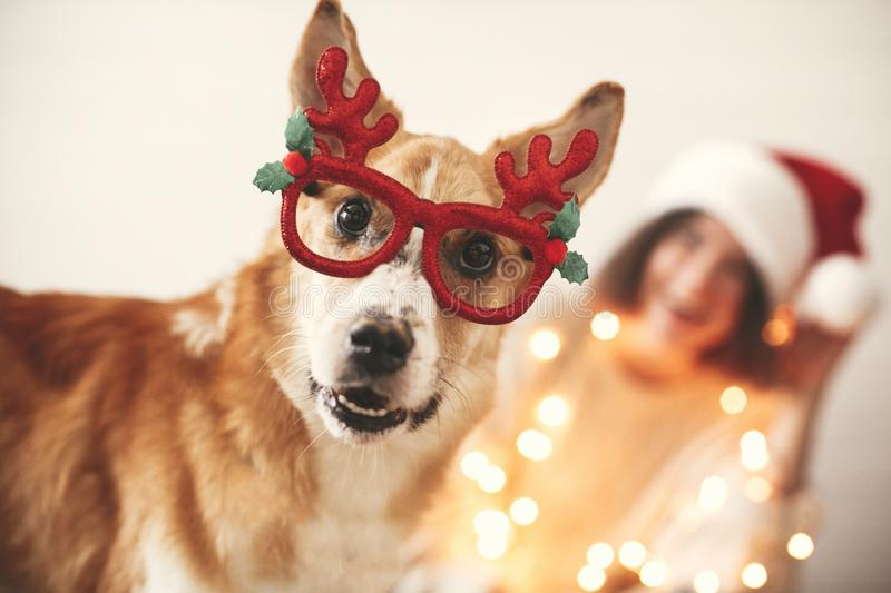 Cute golden dog in festive reindeer glasses with antlers looking with funny emotions on background of smiling girl in santa hat. And christmas lights. Merry royalty free stock photo