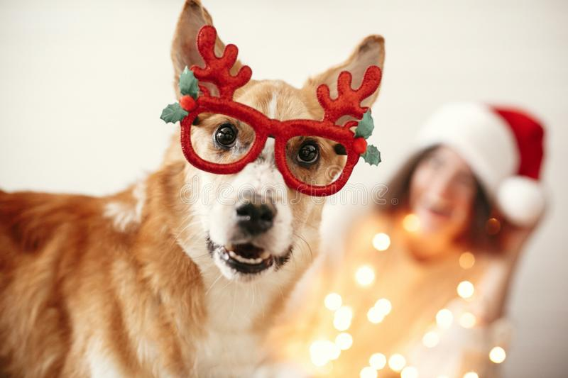Cute golden dog in festive reindeer glasses with antlers looking with funny emotions on background of smiling girl in santa hat. And christmas lights. Merry royalty free stock photography