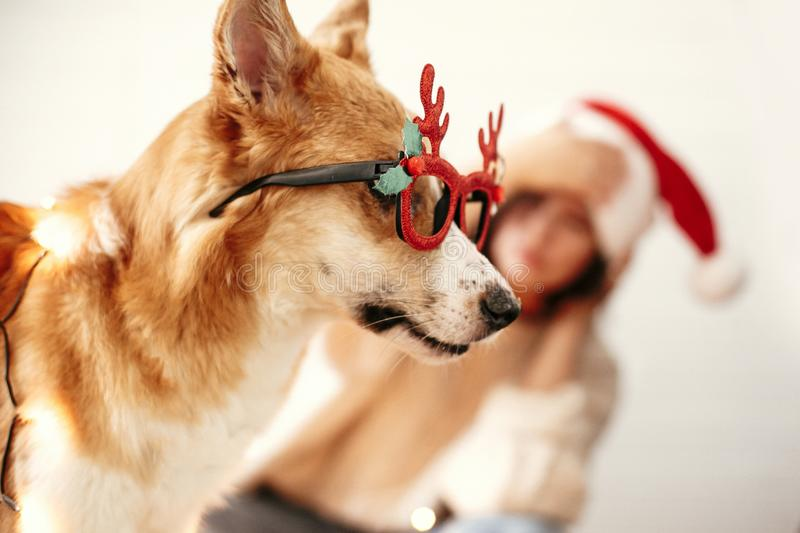 Cute golden dog in festive reindeer glasses with antlers looking with funny emotions in christmas lights on background of smiling. Girl in santa hat. Merry stock photo