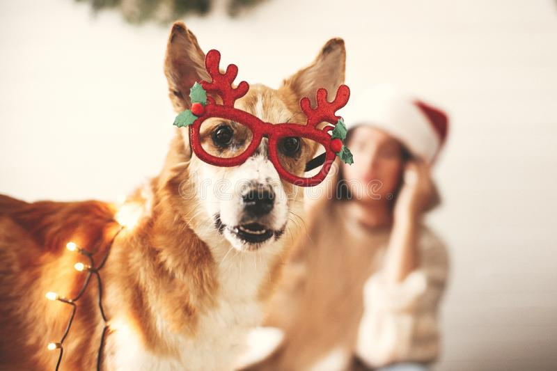 Cute golden dog in festive reindeer glasses with antlers looking with funny emotions in christmas lights on background of smiling. Girl in santa hat. Merry royalty free stock photos
