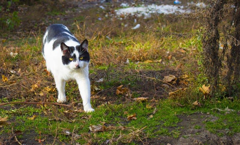 Cute golden-eye kitty royalty free stock photo