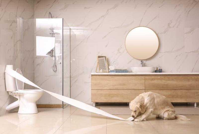 Cute Golden Labrador Retriever spielte mit Toilettenpapier stockfotos