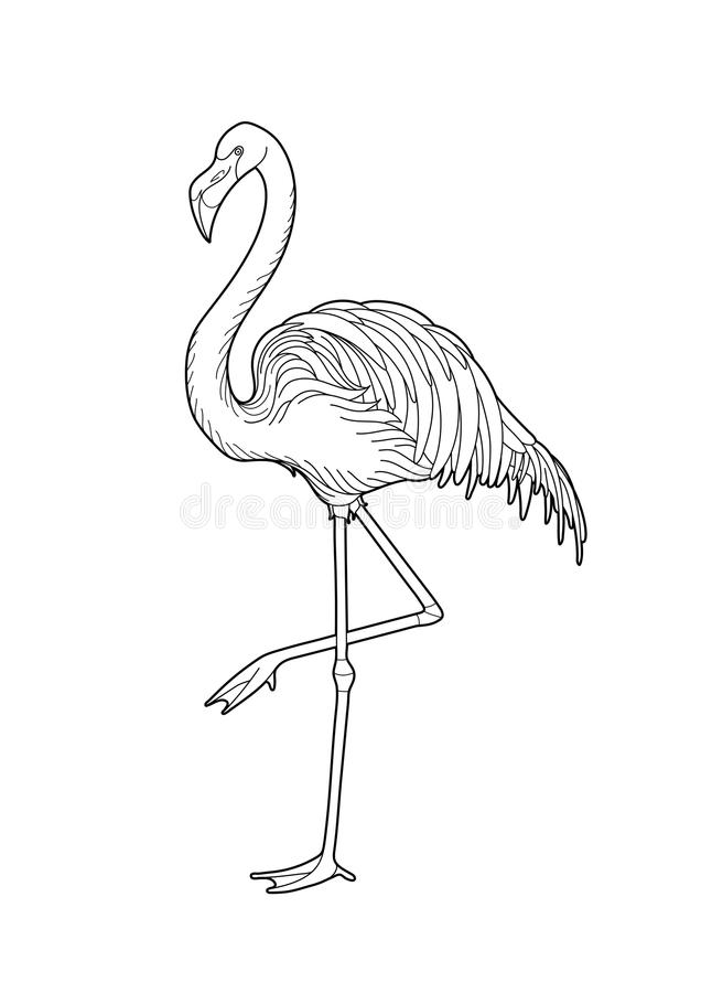 Cute graphic flamingo. In the side view. Pretty exotic bird isolated on white background. T-shirt print or tattoo illustration. Coloring book page design for stock illustration