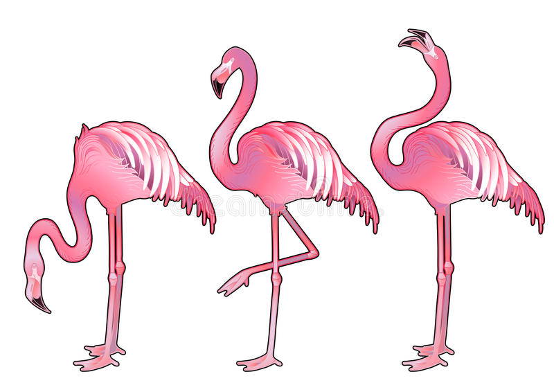 Cute graphic flamingo. In the side view. Pretty exotic birds isolated on white background. T-shirt print or tattoo design stock illustration