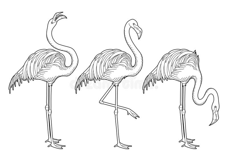 Cute graphic flamingo. In the side view. Pretty exotic birds isolated on white background. T-shirt print or tattoo illustraton. Coloring book page design for stock illustration