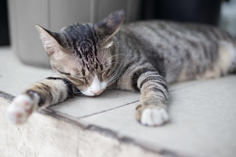 Cat sleeping on the floor royalty free stock image