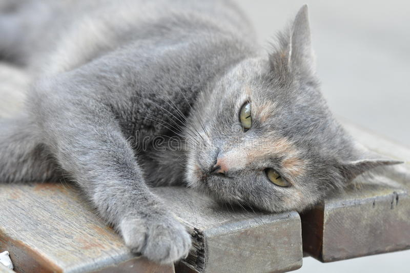 Cute gray cat stock photo