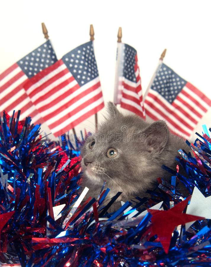 Cute gray kitten with American flags stock photo