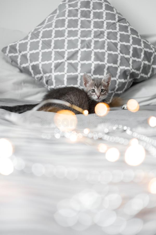 Cute gray kitten playing with Christmas toys on a bokeh background. New Year`s lights royalty free stock photo