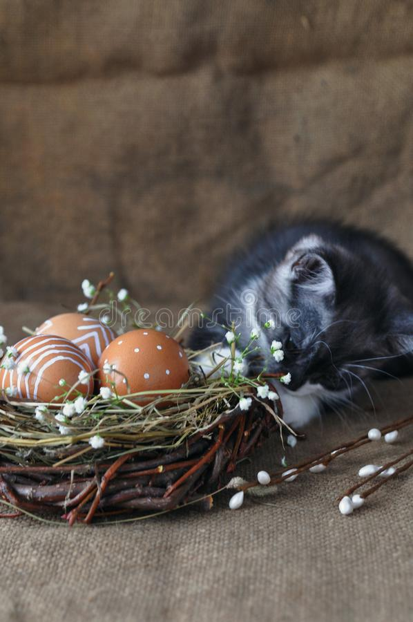 Cute gray little kitten next to the Easter eggs the natural red color with graphic print of white paint in a wicker nest, and royalty free stock photos