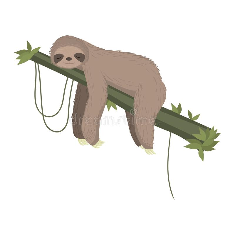 Cute gray sloth sleeping, resting on tree branch isolated on white background vector illustration