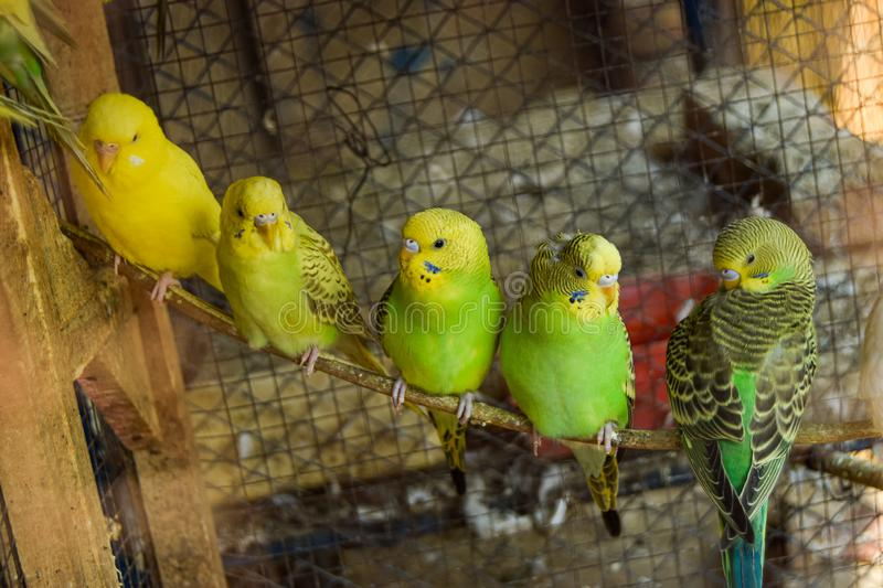 Cute Green Birds sit on Wood Stick. With Friends royalty free stock images