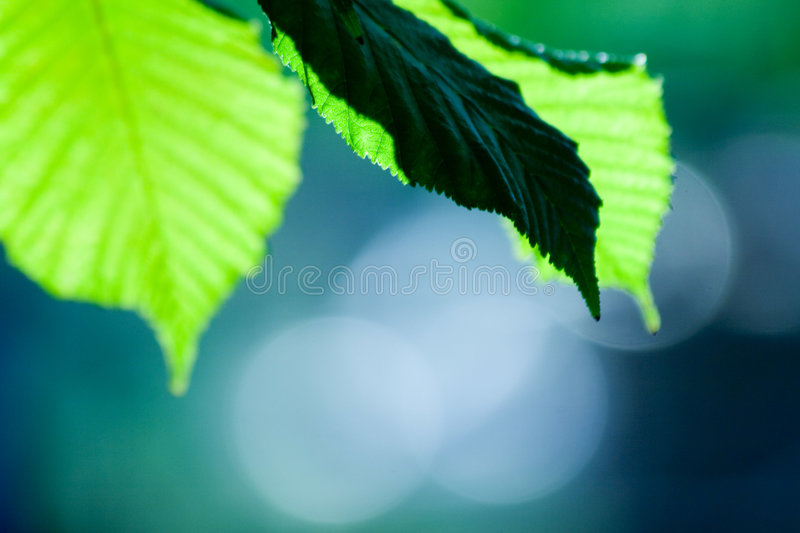 Cute green leafs. Photo of a green leafs with interesting texture and cool depht of field royalty free stock photos