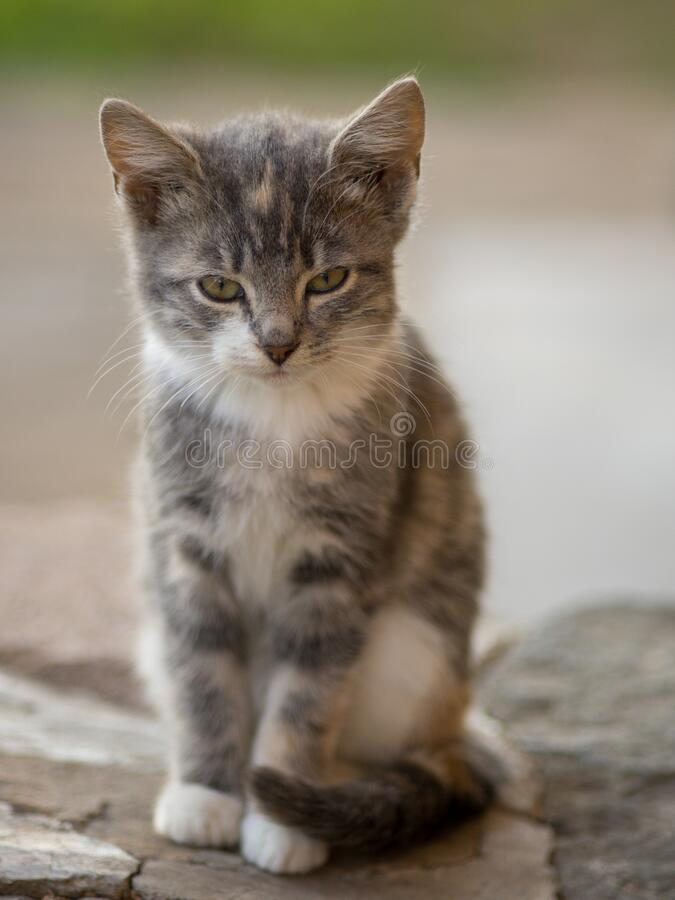Cute grey kitten sitting on the stone floor outdoor. Cat portrait.  royalty free stock photo