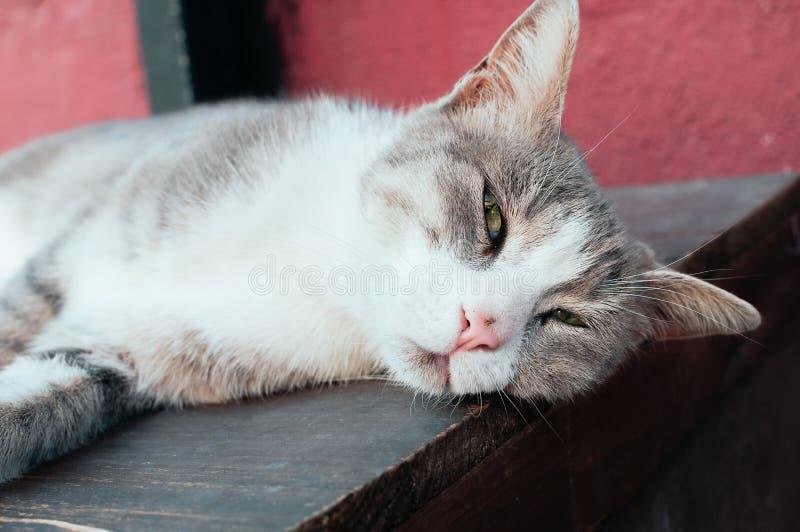 Cute grey street cat lying stock photos