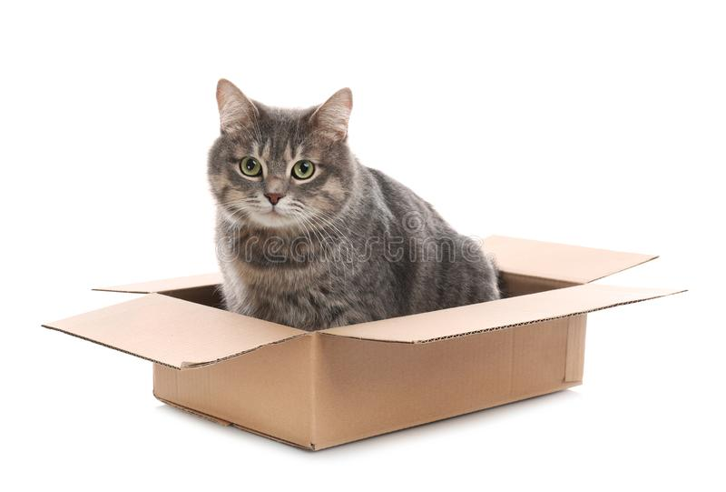 Cute grey tabby cat sitting in cardboard box on white stock photos
