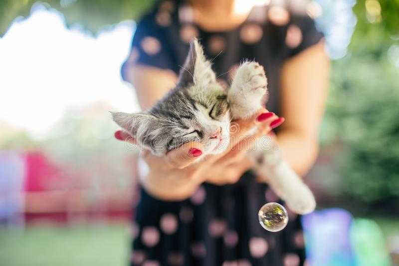 Cute grey and white kitten sleeps on womans hands in a dress and wearing red nails. Outside. Woman holds slipping kitten royalty free stock photos
