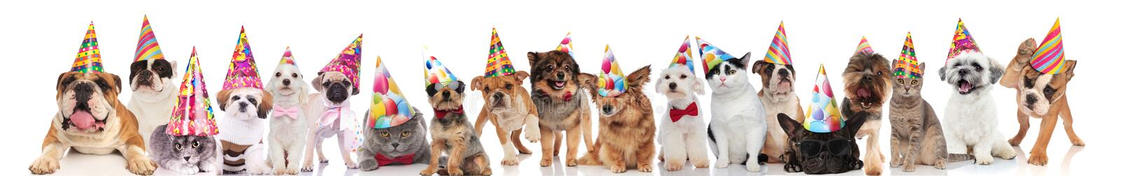 Cute group of many cats and dogs ready for party. Cute group of many cats and dogs ready for birthday party standing, sitting and lying on white background royalty free stock photo