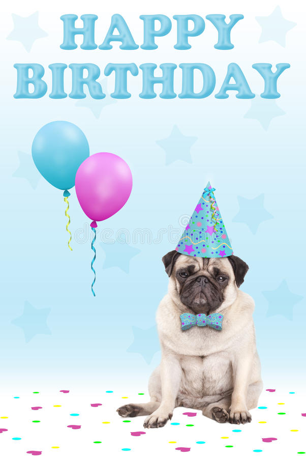 Cute grumpy faced pug puppy dog with party hat, balloons, confetti and text happy birthday, on blue background. Adorable cute grumpy faced pug puppy dog with royalty free stock image