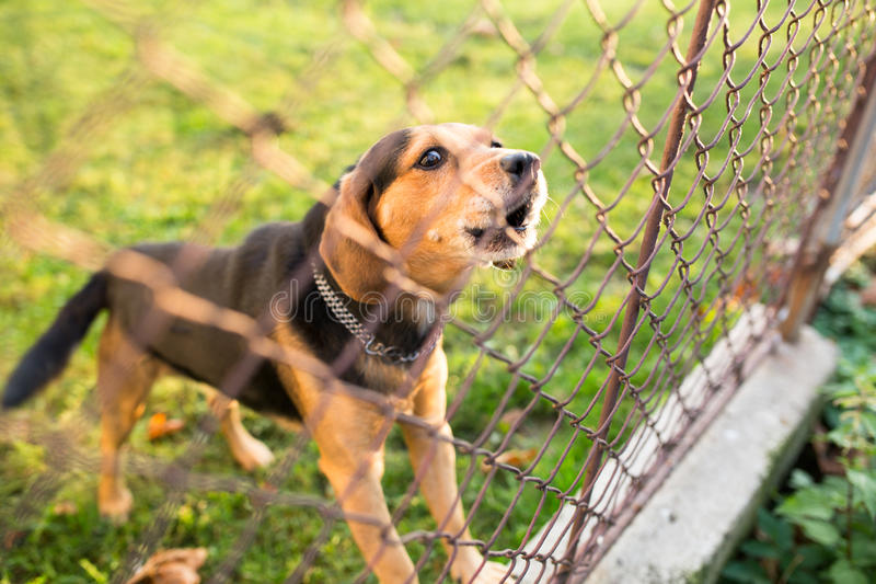 Cute guard dog behind fence stock image