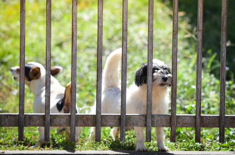 Cute guard dog behind fence stock photography