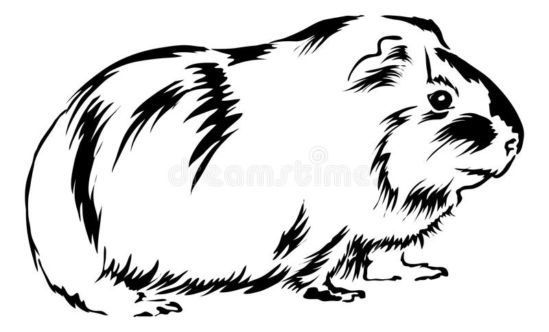 Cute Guinea Pig stock illustration