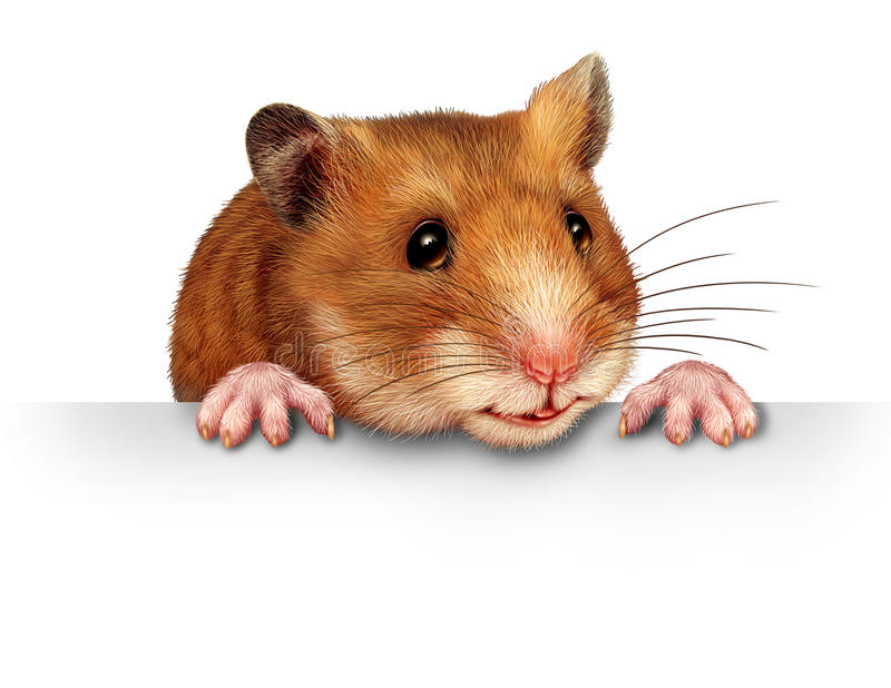 Cute Hamster. Smiling and happy holding a blank white billboard communications card with pink hairy paws and realistic detailed fur on a white background vector illustration