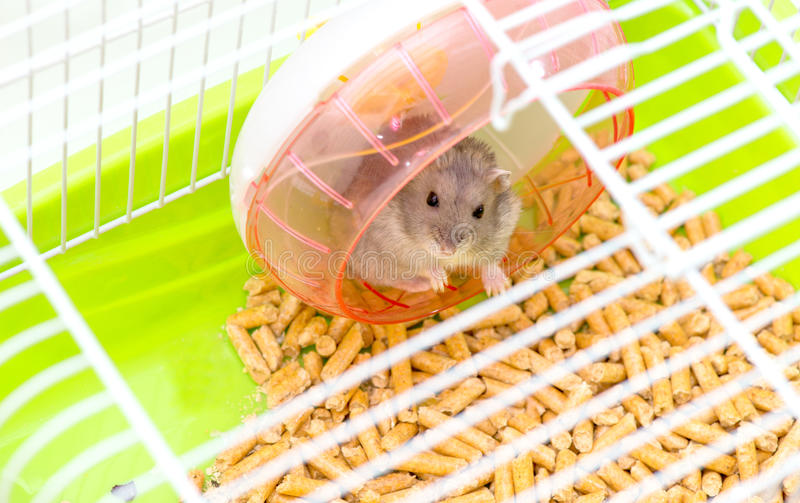Cute hamster sitting in a cage and looking through the lattice cells stock images
